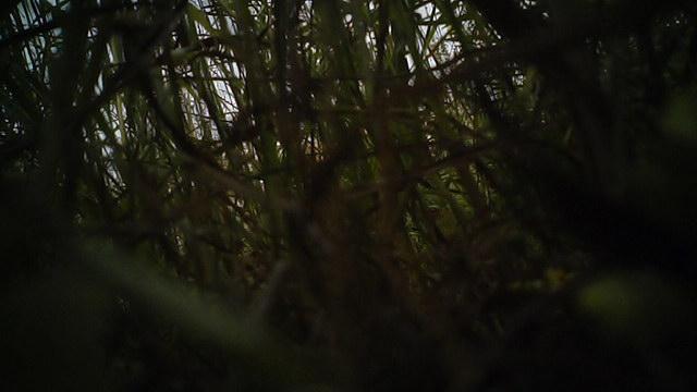 Вертолет упал в высокую траву